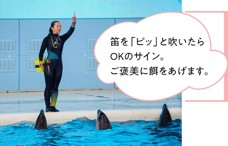 めぐ さん トレーナー イルカ